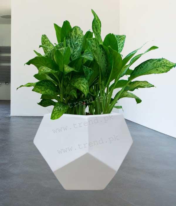 plant-pot-planter-fiberglass-with-plant-1